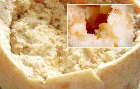 asticot blanc dans la cuisine il est déconseillé de consommer le fromage italien aux asticots