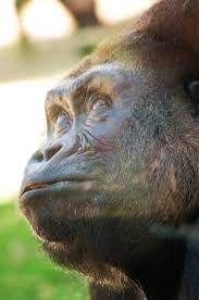 152 best zoo u0027s across america images on pinterest zoos wild