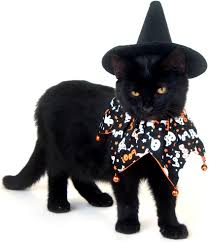 halloween halloween cat witch costume coloring pages printable