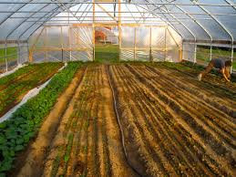 1 hydroponics farm business plan small greenhouse awesome and