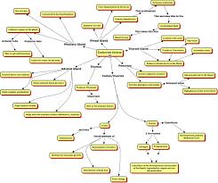endocrine system concept map endocrine system cmap rid 1h6hwdvb1 1gdzchq tqy partname htmljpeg