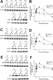 Parts Of Speech Worksheet Role Of C Ebp Homologous Protein In Retinal Ganglion Cell Death