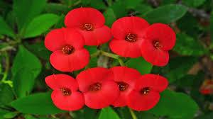 beautiful flowers of bangladesh faysal share youtube