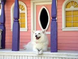 north american eskimo dog association 36 best pets images on pinterest animals pets and funny animals