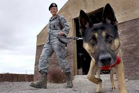 dogs of war 23 facts you never knew about military working dogs