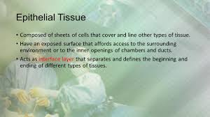 Types Of Sheets Tissues Living Communities Chapter 4 Introduction Cells Of