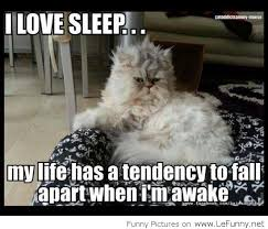 Funny Sleep Memes - i love sleep