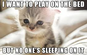 Cat Problems Meme - first world cat problems the tango