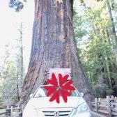 Chandelier Tree Address Drive Thru Tree 219 Photos U0026 117 Reviews Parks 67402 Drive