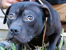 Burying Your Dog In The Backyard Legality Michael Vick U0027s Unpaid Dues Why Dog Advocates Aren U0027t Moving On