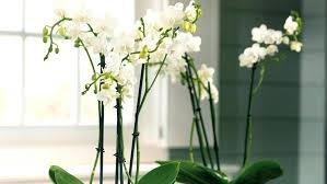 plante de bureau feng shui plante de bureau jardiland plante de bureau feng shui isawaya info
