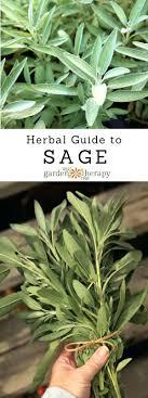 indoor herb garden kits to grow herbs indoors hgtv easy herb garden kit diy indoor growing herbs indoors