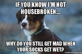 You Still Mad Meme - if you know i m not housebroken why do you still get mad when