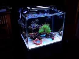 Aquascape Online Aquascaping Show Your Skills Page 10 Reef Central Online