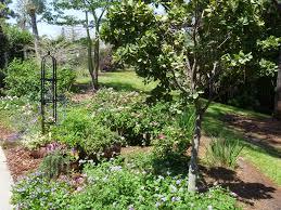 reader photos a cottage garden in southern florida fine gardening