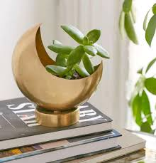 cute plant 31 perfect gifts for anyone who loves succulents