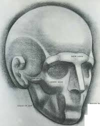 forms of skull drawing the human head joshua nava arts
