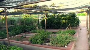 backyard vegetable garden with beds and covers vegetable plants