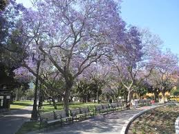 Flower San Jose - san jose 2017 best of san jose ca tourism tripadvisor