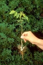 best 25 tree seedlings ideas on celtic christianity