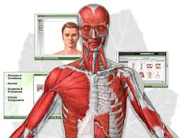 Interactive 3d Anatomy Human Anatomy Anatomy Skecth Human Body Vector Organ Male Female