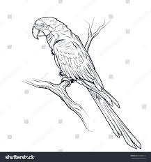 macaw parrot ara illustration coloring page stock vector 649482214