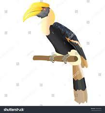 hornbill vector stock vector 189833882 shutterstock