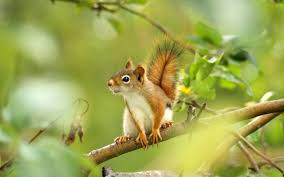 squirrel latest photos backgrounds hd wallpapers download