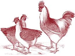 free vintage chicken graphics the graphics