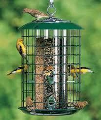 Backyard Wild Birds Types Of Squirrel Proof Bird Feeders Backyard Chirper