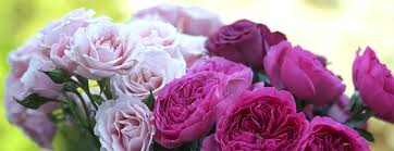 flower delivery omaha ne piccolo s florist omaha elkhorn ne flower delivery