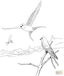 barn swallows coloring page free printable coloring pages