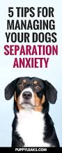 dog barks when we leave best 25 dog separation anxiety ideas on pinterest puppy anxiety