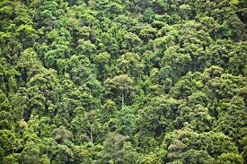 Under Canopy Rainforest by 9 Major Primary Producers In The Tropical Rainforest