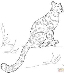 leopards coloring pages free coloring pages