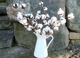 cotton boll stems set 3 20 cotton stems cotton