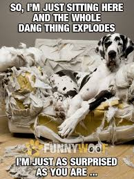 Dog Owner Meme - funny dog memes