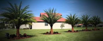 oasis palms and landscaping tampa apollo beach