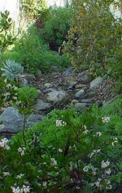 17 beste ideeën over california native landscape op pinterest