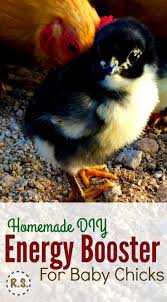 Backyard Laying Chickens by 199 Best Egg Laying Chickens Images On Pinterest Raising
