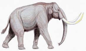 columbian mammoth eurasian steppe mammoth