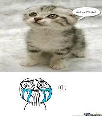 Funny Kitten Meme - cute kitten by recyclebin meme center
