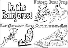 of rainforest animals coloring page free download
