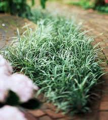 great groundcovers grass weeds ground covering and