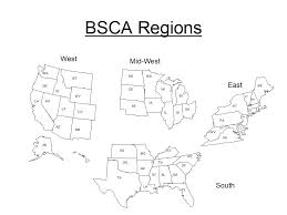 belgian sheepdog drawings national specialty guidelines appendix a bsca n s regions
