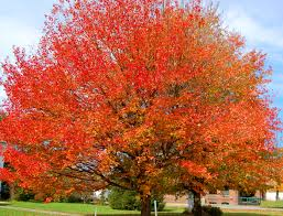 of the best trees for any backyard to plant ideas on pinterest