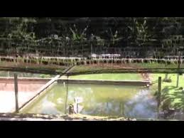 check out this tropical fish farm in singapore