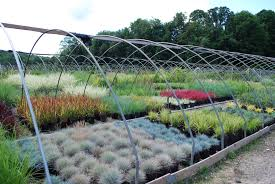 grasses planters choice