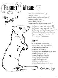 Ferret Meme - ferret meme by starrypoke on deviantart