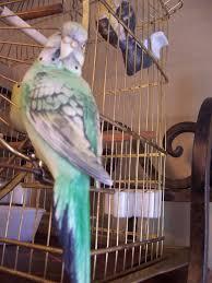 28 best antique bird cage images on antique bird cages